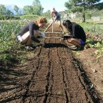 MIllenials Dig into Conscientious Food Production