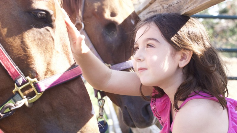 Horses with Heart 5