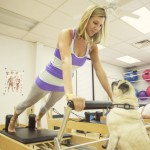 Getting Fit With Fido 1