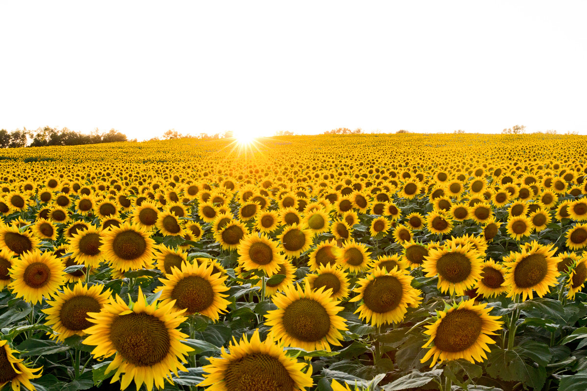 fields of sunshine leawood lifestyle magazine