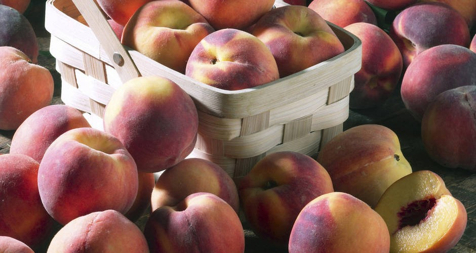 Peachy Keen on the Western Slope Harvest