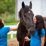 Changing Leads Equine Rescue  Changes Lives 11