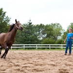 Changing Leads Equine Rescue  Changes Lives 9
