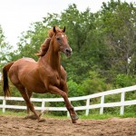 Changing Leads Equine Rescue  Changes Lives 8