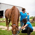 Changing Leads Equine Rescue  Changes Lives 1