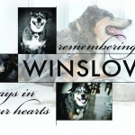 We Remember Winslow