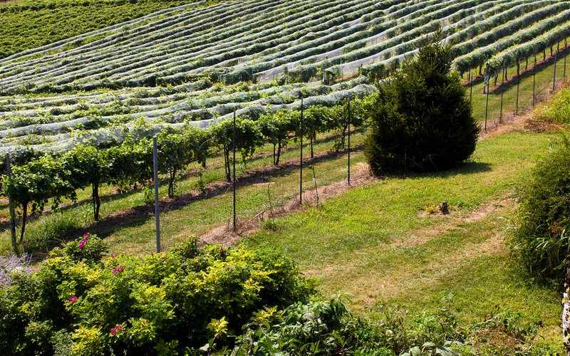 Vox Vineyards' Jerry Eisterhold Cultivates the Voice of the Land