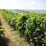 Vox Vineyards' Jerry Eisterhold Cultivates the Voice of the Land 10