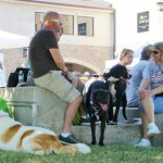 The Million Mutt March & Woofstock 15