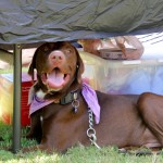 The Million Mutt March & Woofstock 2