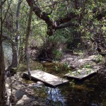 Community Steps Up to Preserve Trails & Open Space 1