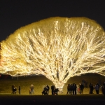 The Spectacular Willow Tree 4