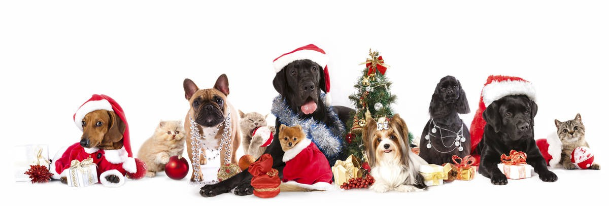 Pet Safe Christmas Tips