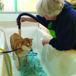Dundee Memorial Dog Wash 4