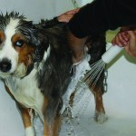 Dundee Memorial Dog Wash 5