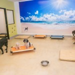 Paw Hills: Peace of Mind for Pet Lovers