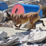 National Disaster Search Dog Foundation 7