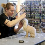 Dogs and Cats in Lap of Luxury at New Pet Club 2