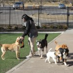 Dogs and Cats in Lap of Luxury at New Pet Club