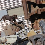 National Disaster Search Dog Foundation 4