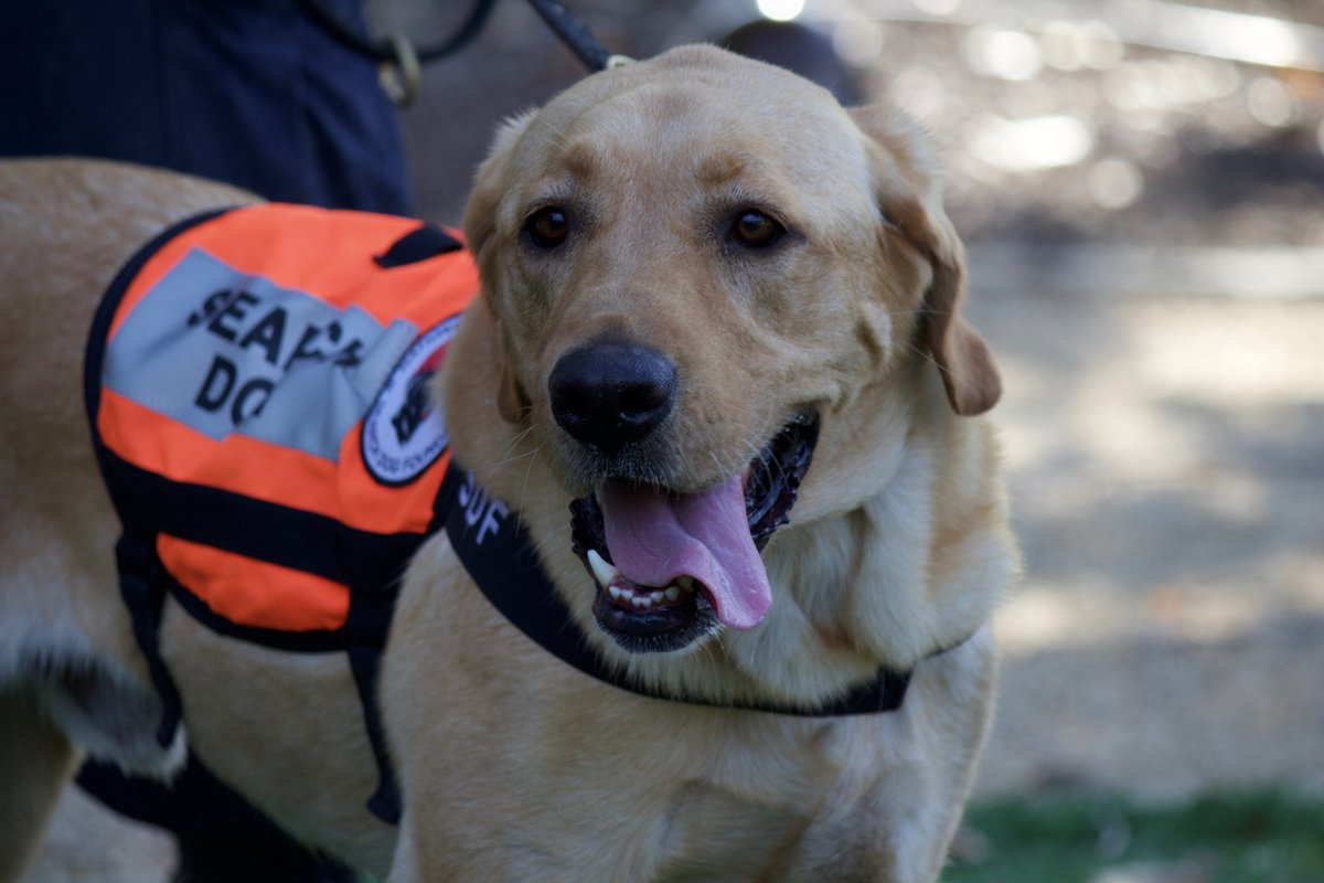 National Disaster Search Dog Foundation 3
