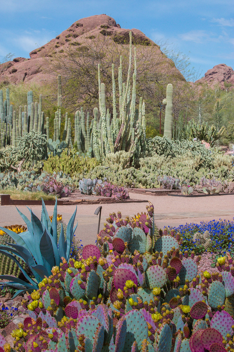 desert botanical garden offers wide variety of classes for kids and adults 1 - Desert Botanical Garden Phoenix