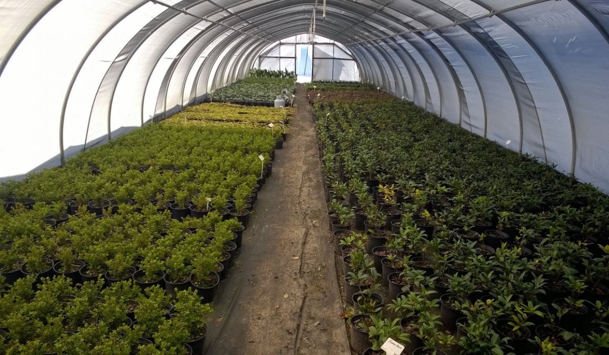 What\'s Sprouting at South Fulton Landscape and Nursery? – South ...