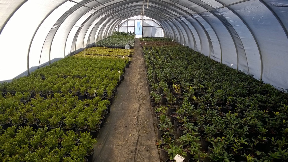 What's Sprouting at South Fulton Landscape and Nursery? 4
