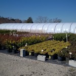 What's Sprouting at South Fulton Landscape and Nursery? 3