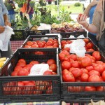 Farm Markets Offer Fresh Produce, Green Alternative 4