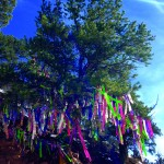 Wishes Do Grow on Trees! 3