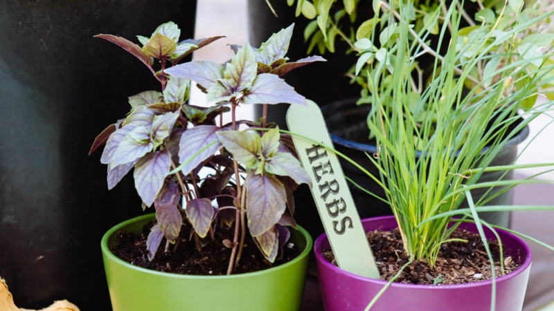 Making Your Herb Garden Grow 5