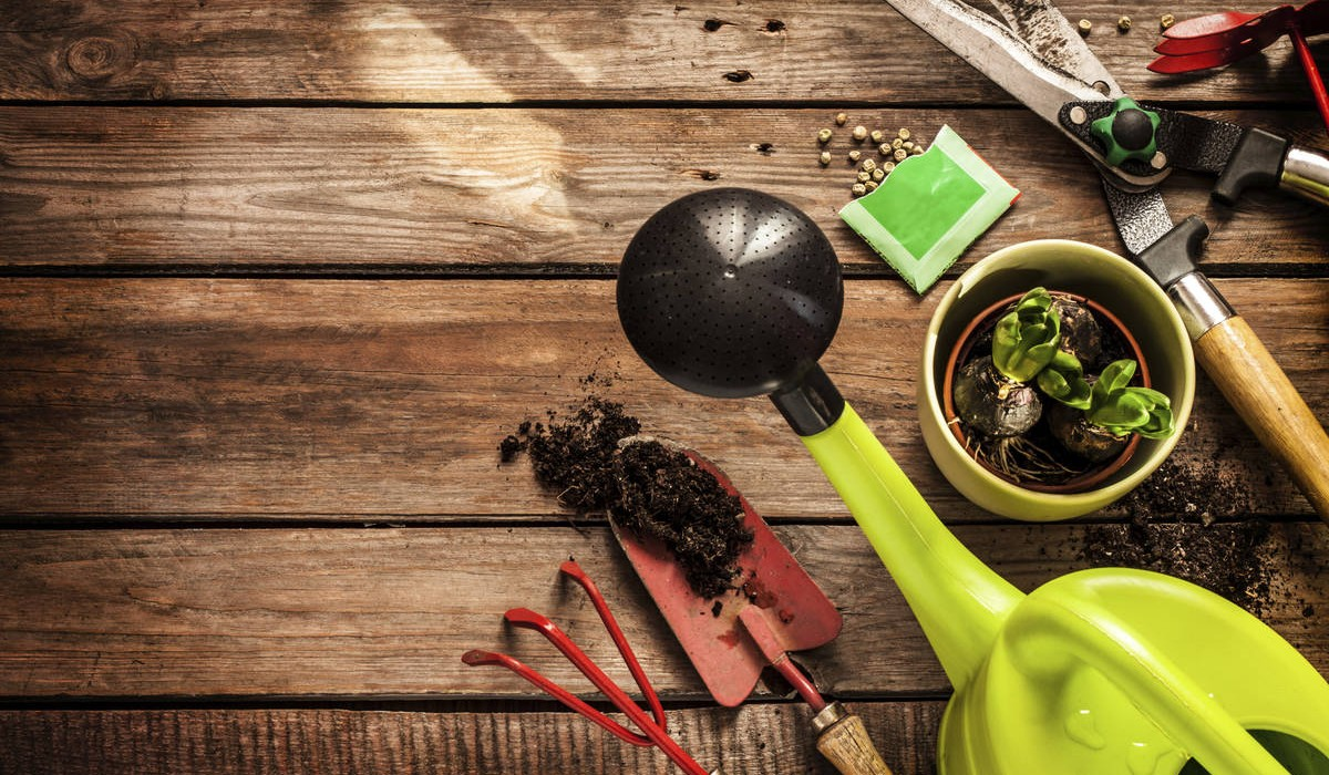 Foolproof Gardening Tips from a Not-So-Pro