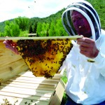 Saving Bees, Caring for Community 1