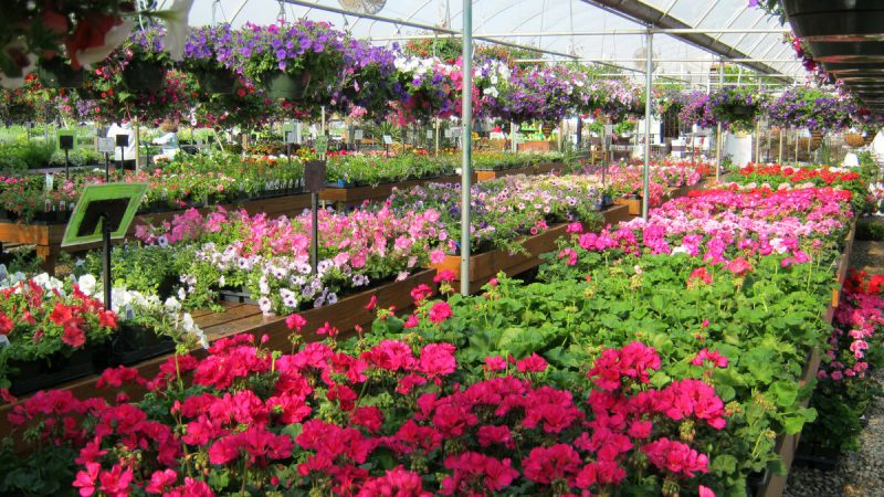 Let's rock it out with Boyert's Greenhouse & Farm 7
