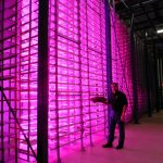Urban Produce, High Density Vertical Farming 7