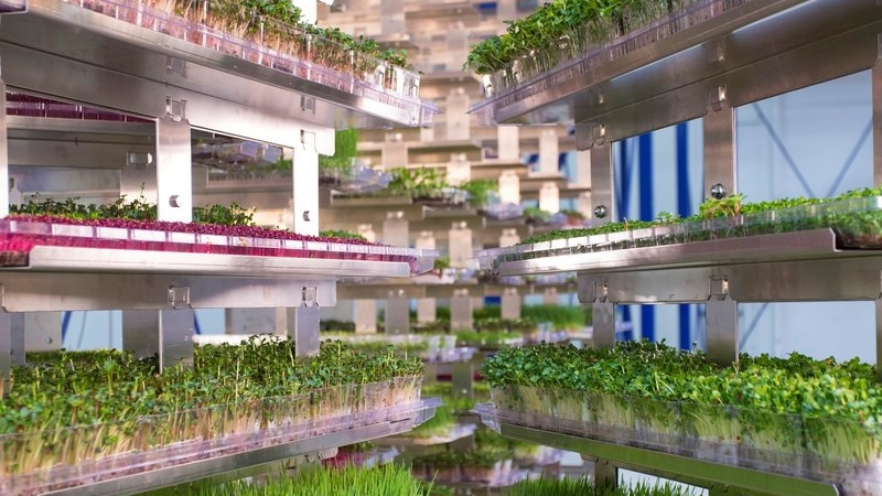 Urban Produce, High Density Vertical Farming 5