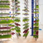 Urban Produce, High Density Vertical Farming
