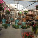 Let's rock it out with Boyert's Greenhouse & Farm 1