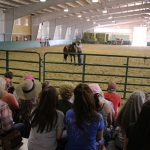 Heyday for Horses at Harmony Equine Center 2
