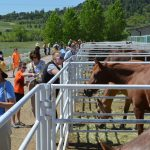 Heyday for Horses at Harmony Equine Center