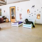 Paw Hills Luxury Pet Hotel & Spa 4