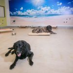 Paw Hills Luxury Pet Hotel & Spa