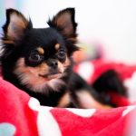 Paw Hills Luxury Pet Hotel & Spa 3