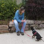 Companions to Our Furry Friends 5