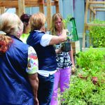 Clinic Gardens: A Locally-Grown Rx for Health 10
