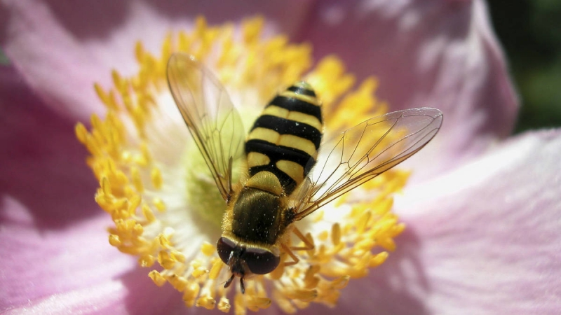 Controlling Pests and Disease Organically