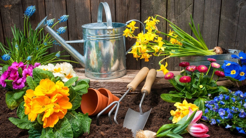 Creating the Perfect Garden