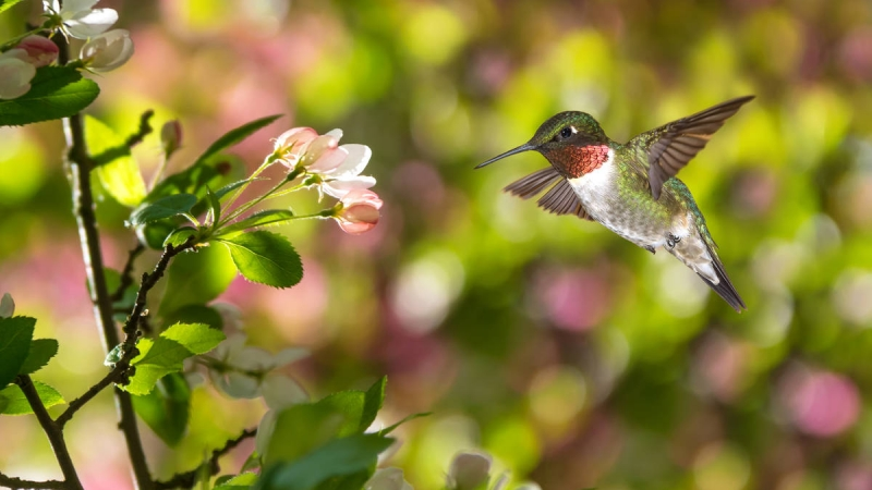 Make Your Outdoor Space Wildlife-Friendly
