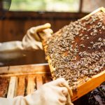 The Buzz on Local Beekeeping
